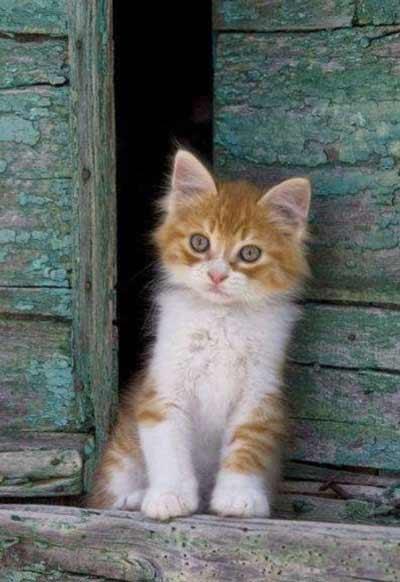 really cute