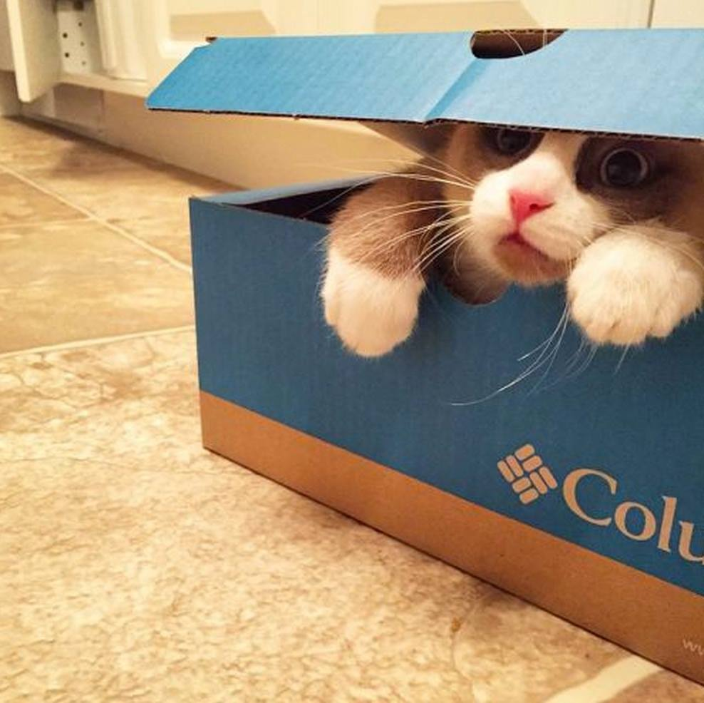 But the box did eat me!