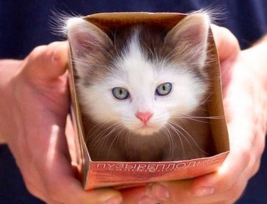 Ooh look, a cat in a box !!