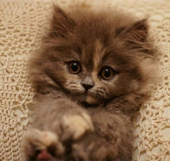 Time for an extremely cute kitten