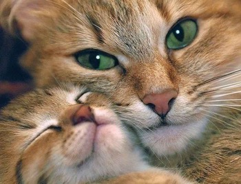 beautiful-mama-cat
