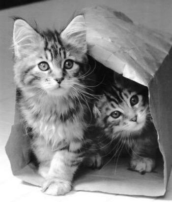 What a mega cute pair!