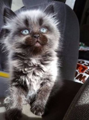 What an amazing werewolf kitty!