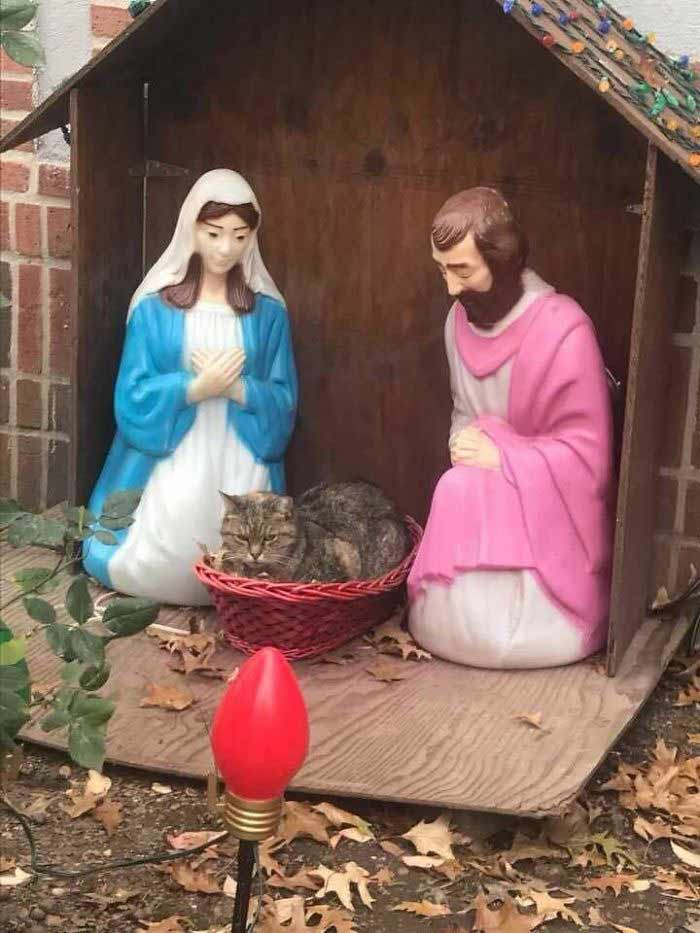 grumpy-nativity-1