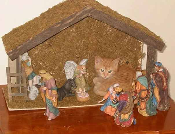 16 Times Cats Hilariously Crashed Nativity Scenes We