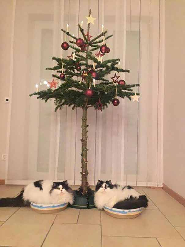How To Cat Proof Your Christmas Tree.16 Genius Ways To Protect Your Christmas Trees From Cats