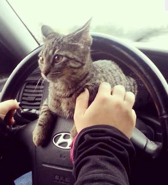 trip-to-the-vet