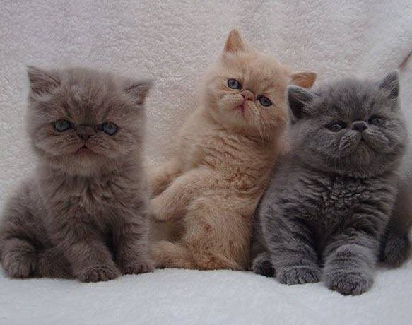 Three little kittens all in a row