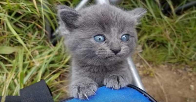 Stray-Kitten-Appears