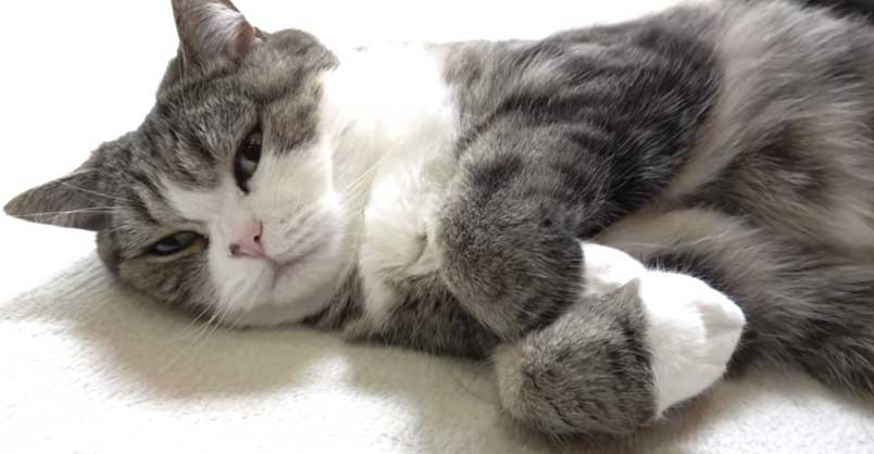 maru-paws