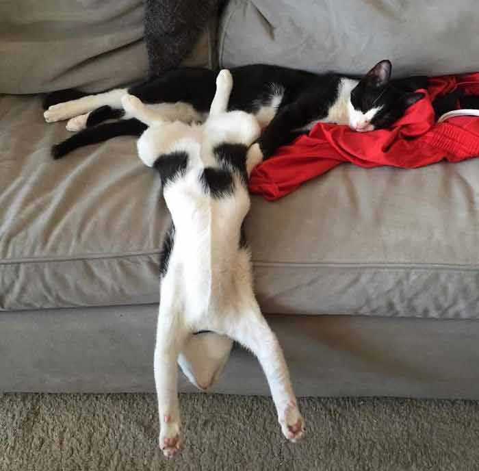 stretch-5