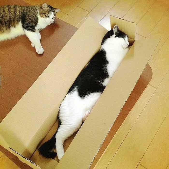 stretch-9