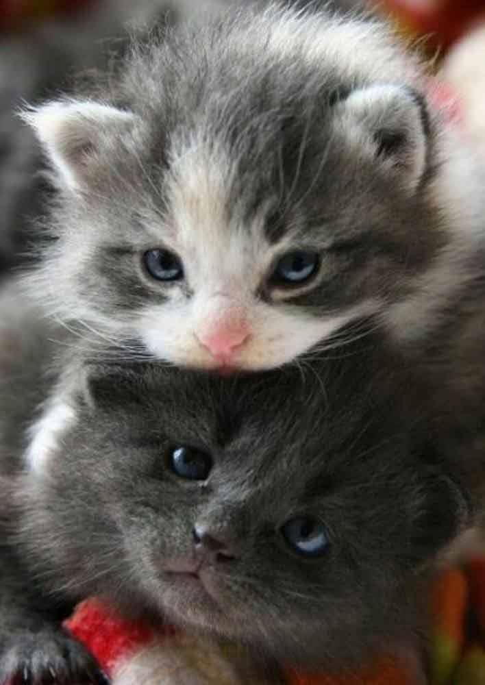 2-cute