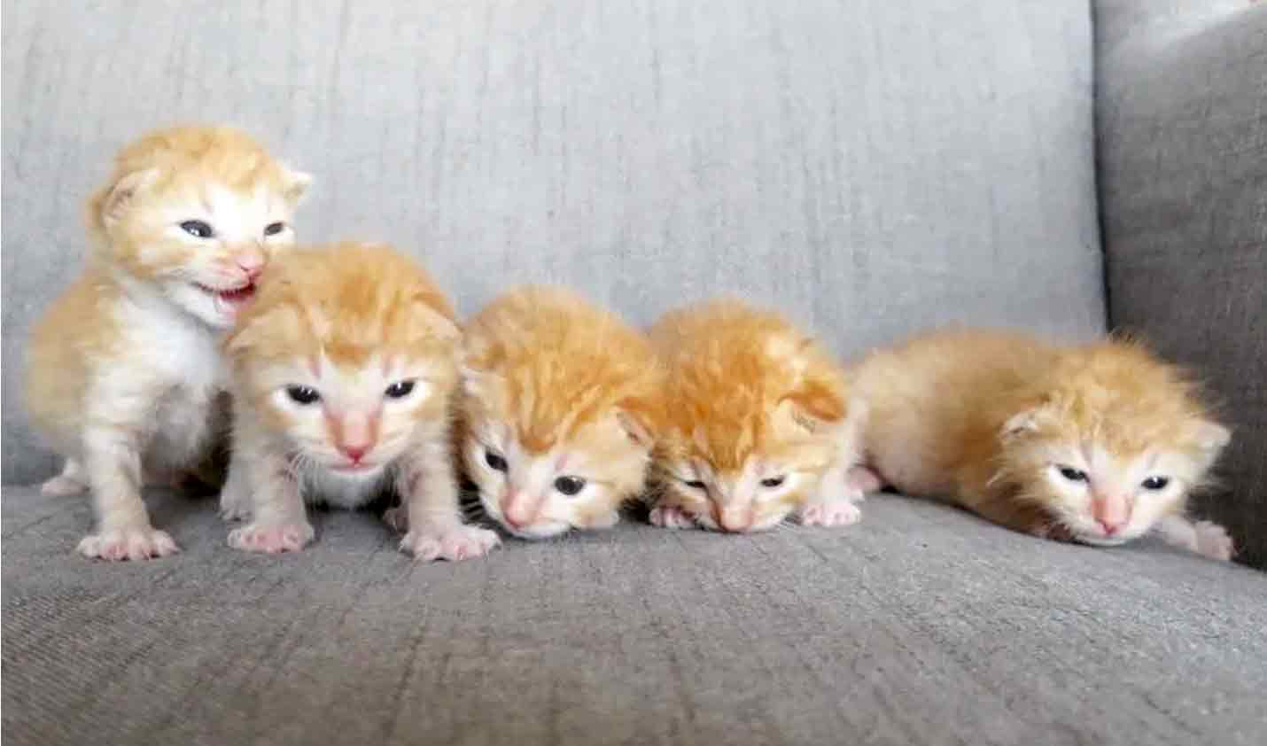 5gingers-6