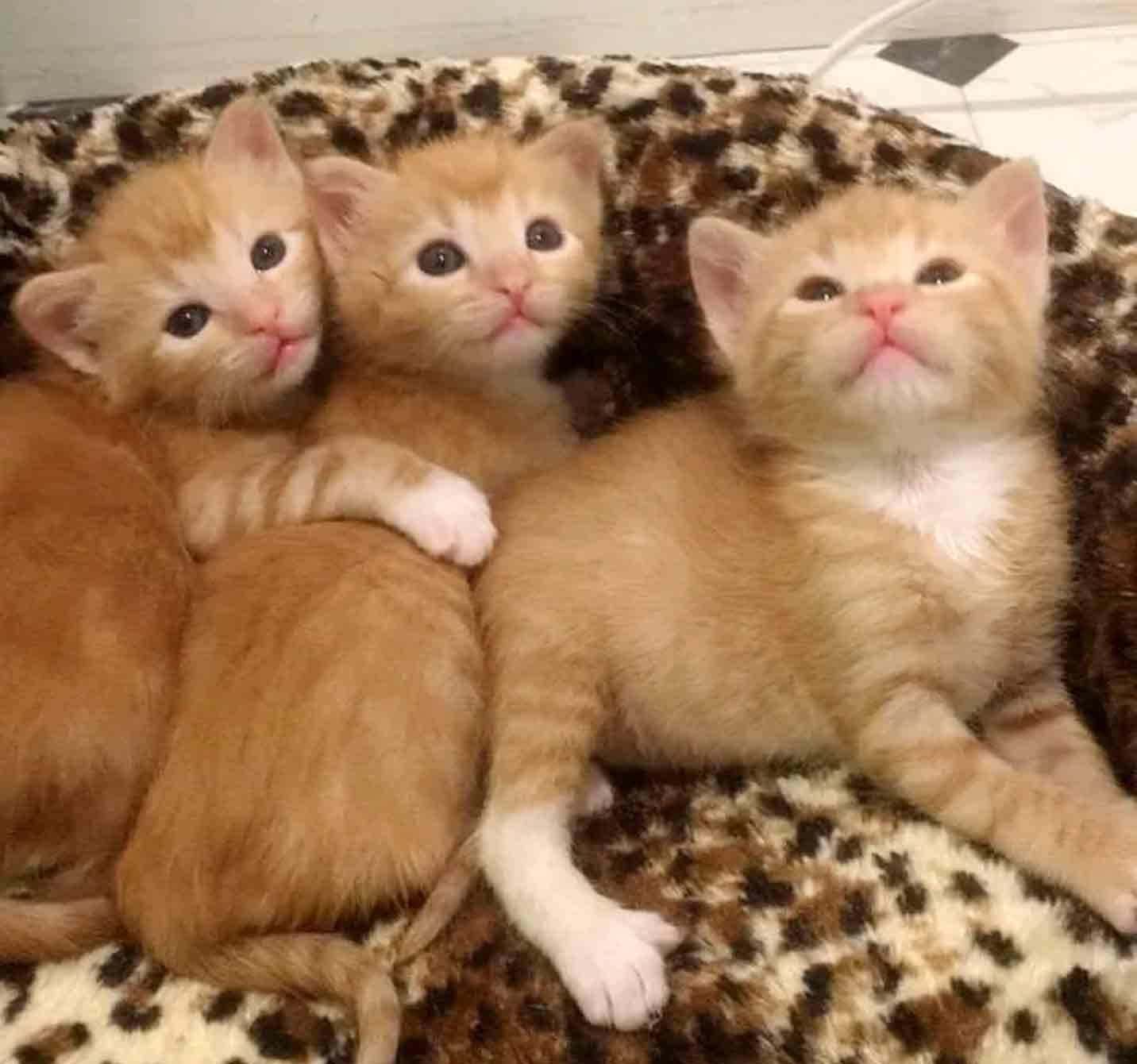 5gingers-7