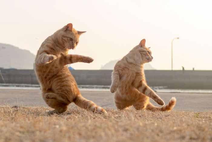 dancing-12