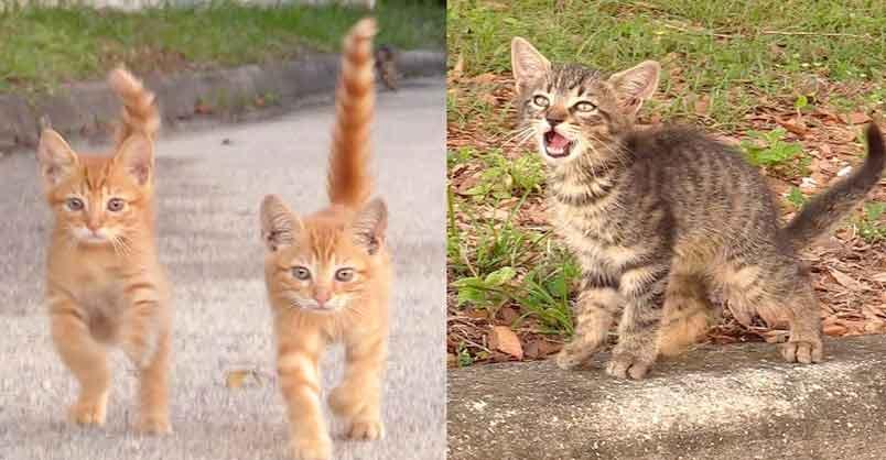 3 Kittens Meow to Stranger for Help