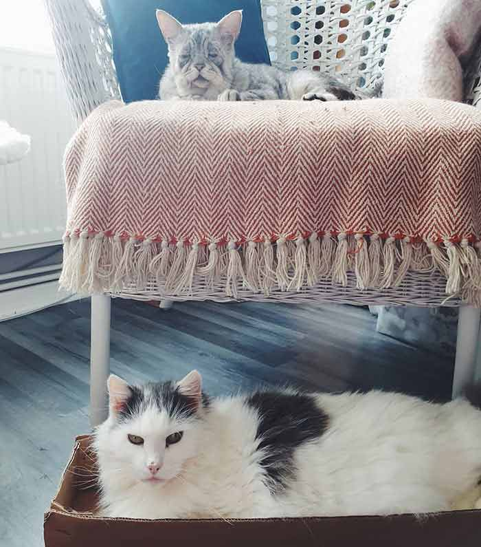 toby 1 Cat With Ehlers-Danlos Syndrome Finally Finds Forever Home