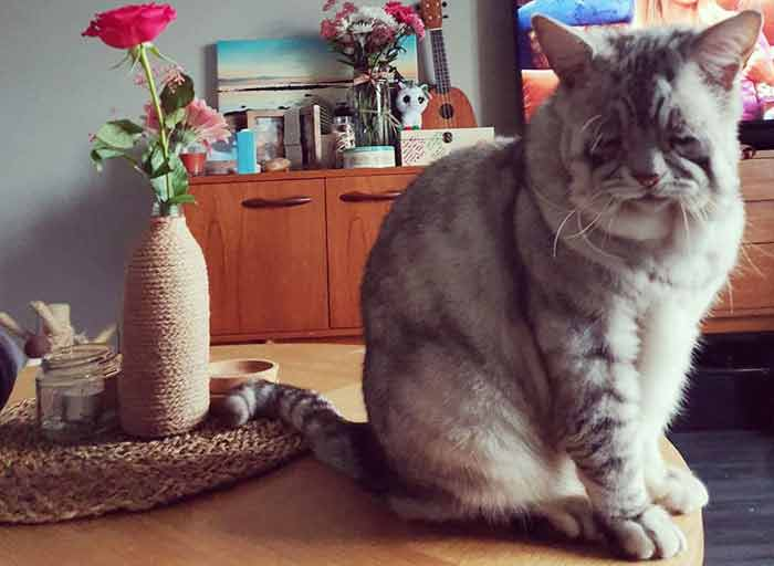 toby 11 Cat With Ehlers-Danlos Syndrome Finally Finds Forever Home