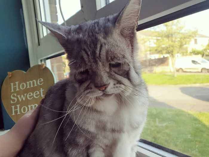 toby 2 Cat With Ehlers-Danlos Syndrome Finally Finds Forever Home