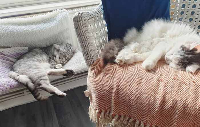 toby 3 Cat With Ehlers-Danlos Syndrome Finally Finds Forever Home