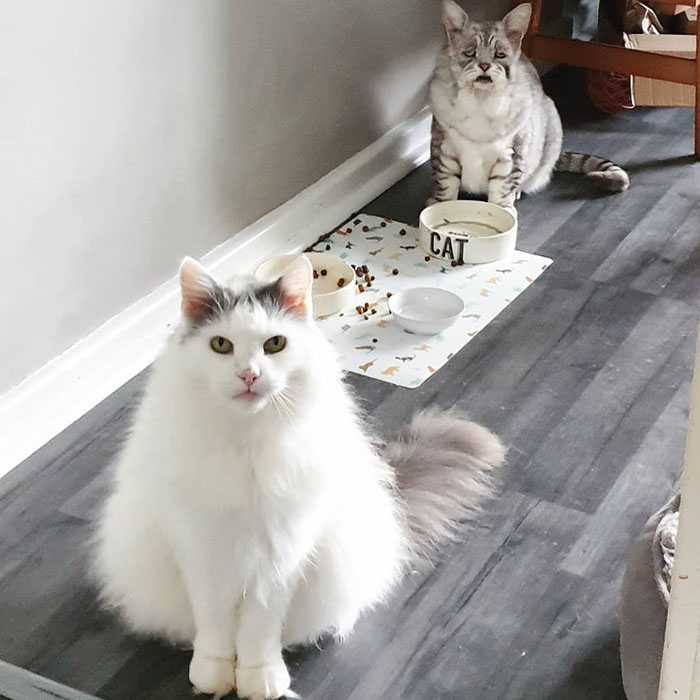 toby 4 Cat With Ehlers-Danlos Syndrome Finally Finds Forever Home