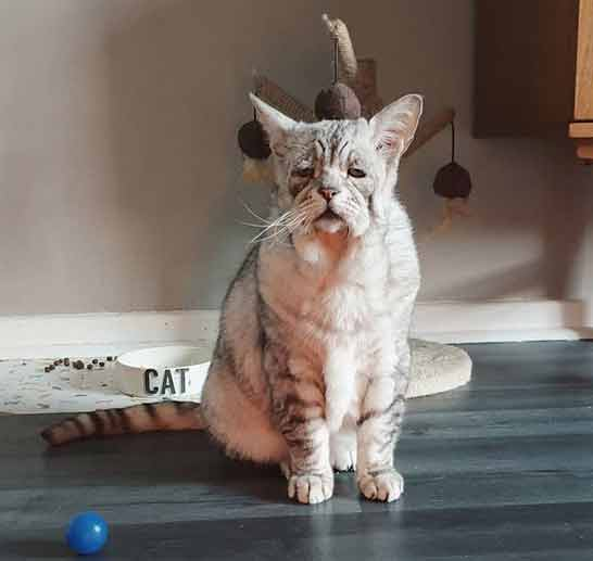 toby 8 Cat With Ehlers-Danlos Syndrome Finally Finds Forever Home