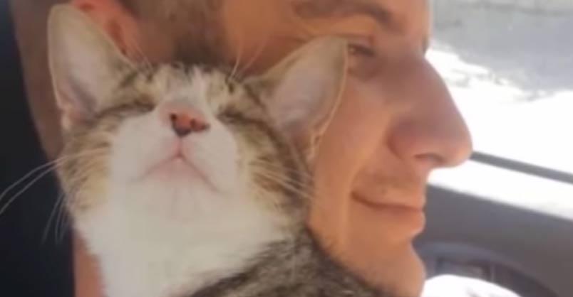 Blind Kitten Meets