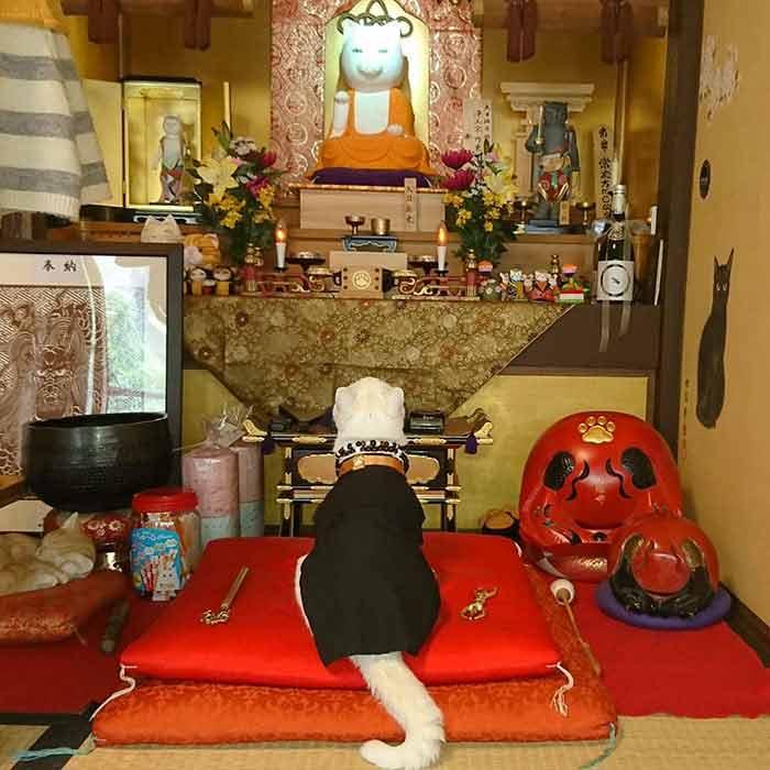 shrine-23