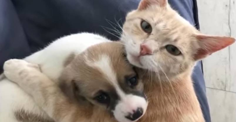 Cat Who Lost Her Kittens Adopts Orphaned Puppies As If They Are Hers