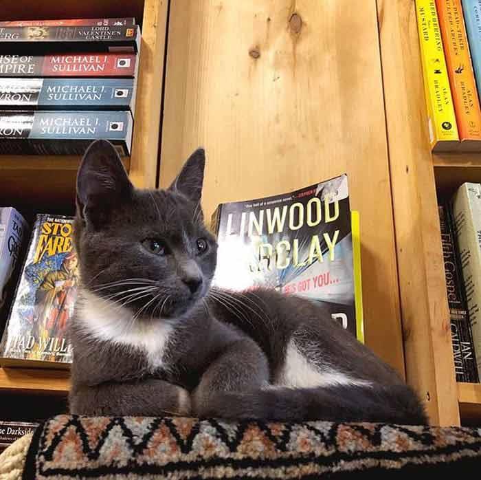 bookstore-4