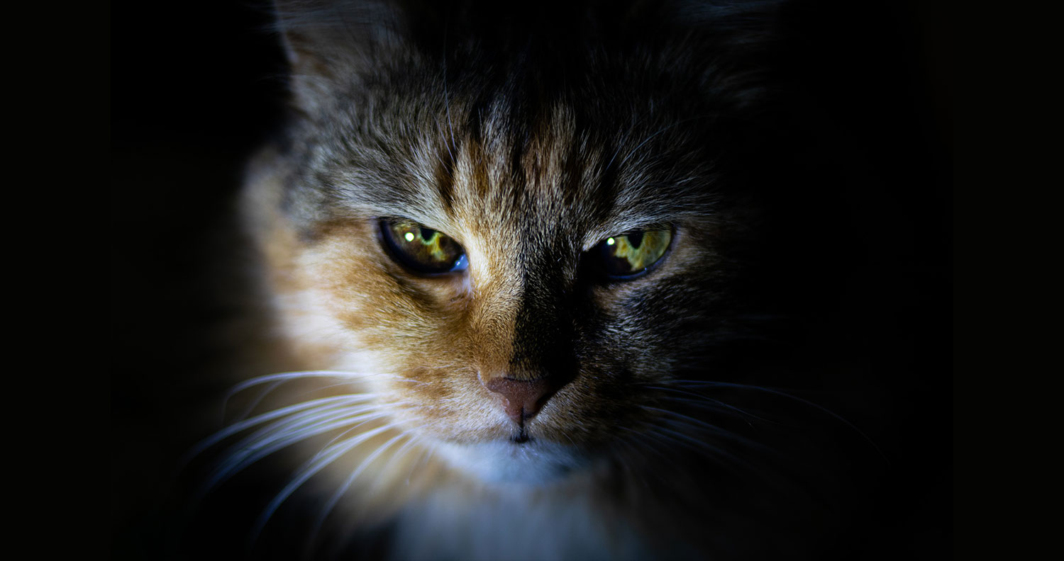 facts-about-cats