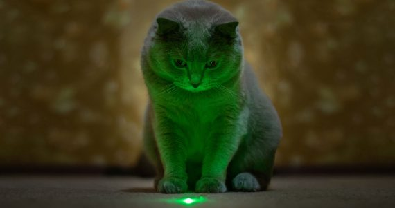 laser light for cats