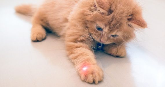 laser pointer cat toy