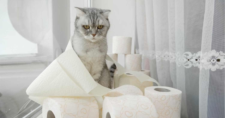 cat foods for diarrhea