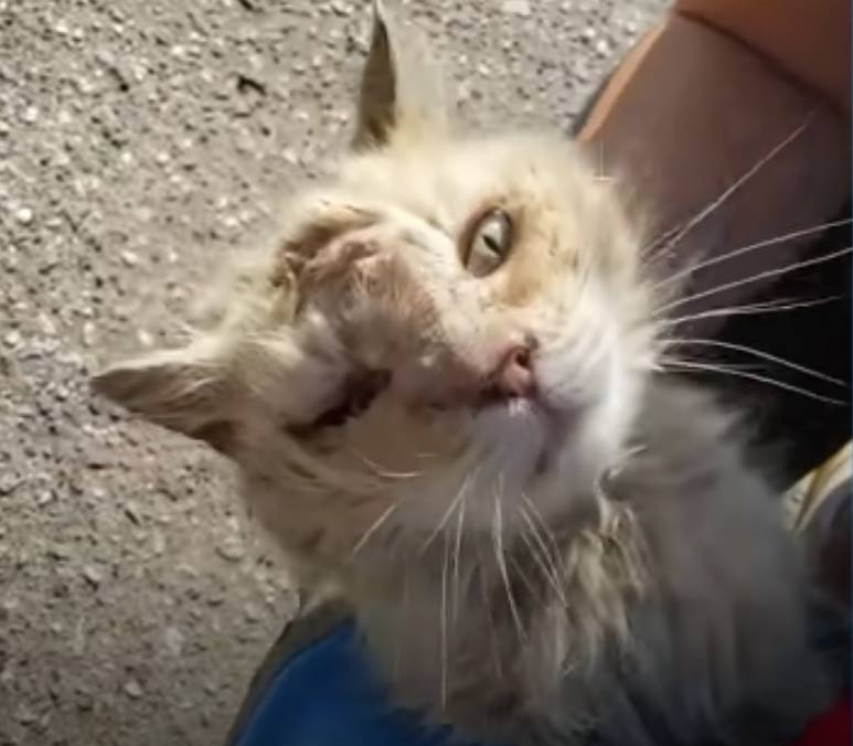Cat Abandoned On The Street Won't Stop Kissing His New Mom On Her Nose - We Love Cats and Kittens