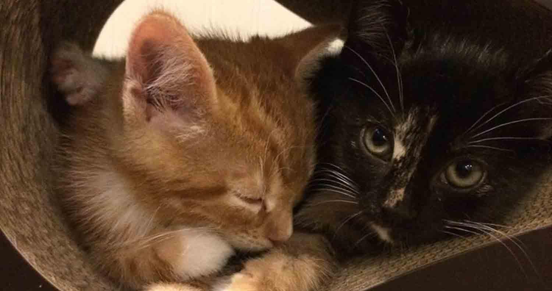 cat-scratcher-petfusion