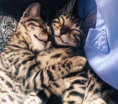 happy cuddle
