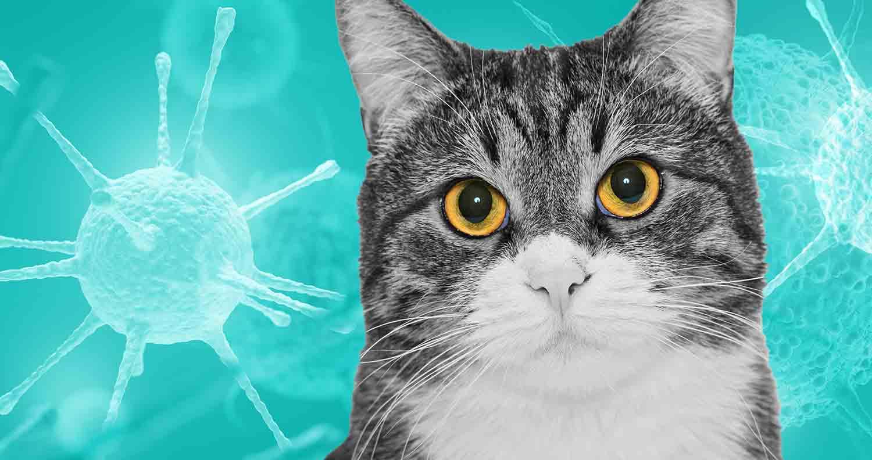 Feline-Immunodeficiency-Virus