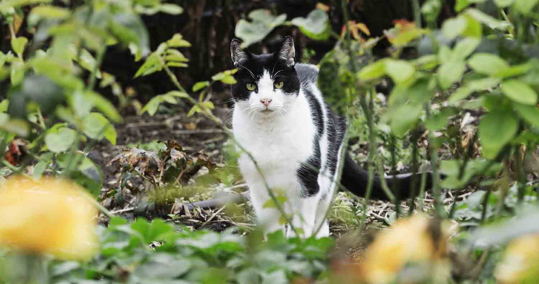 cat-health-fiv