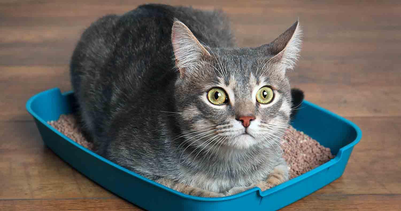 cat-litter-box-liners