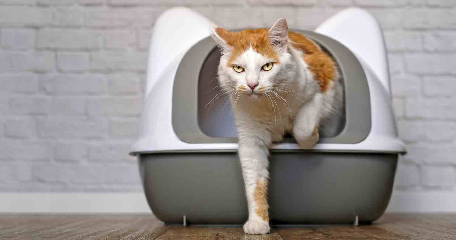 litter-box-liner-cat-products