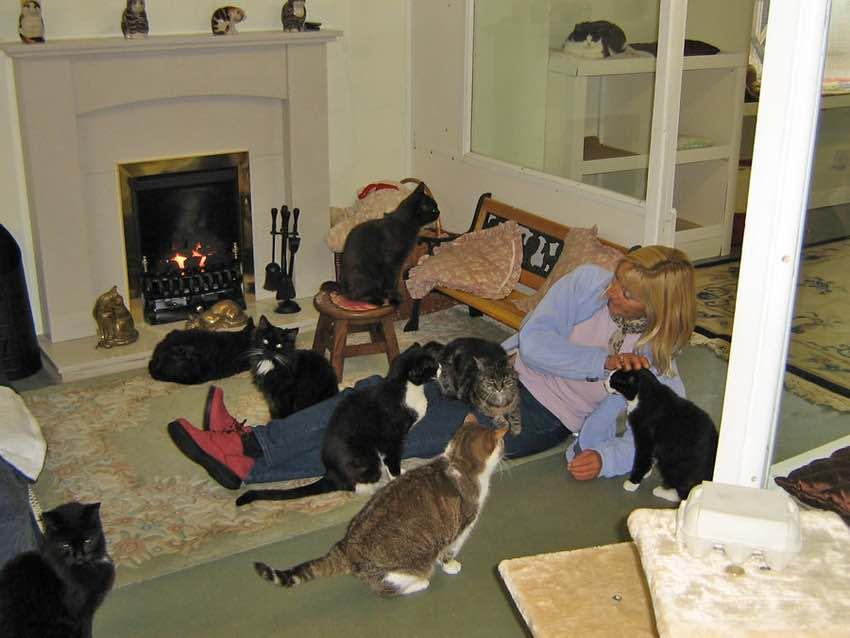 lincolnshirecats2