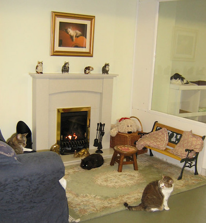 lincolnshirecats3