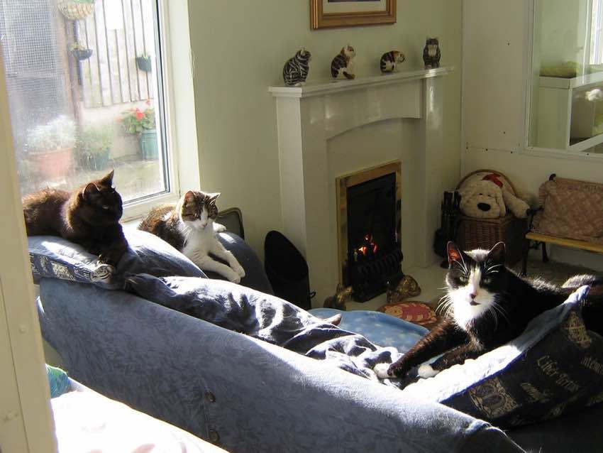 linconshirecats1