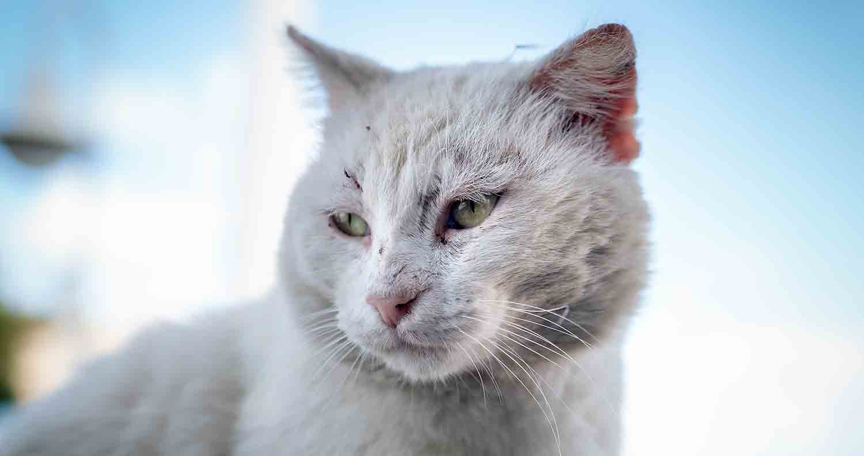 cat-cancer-symptoms
