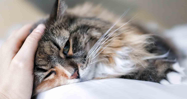 sick-cat-symptoms