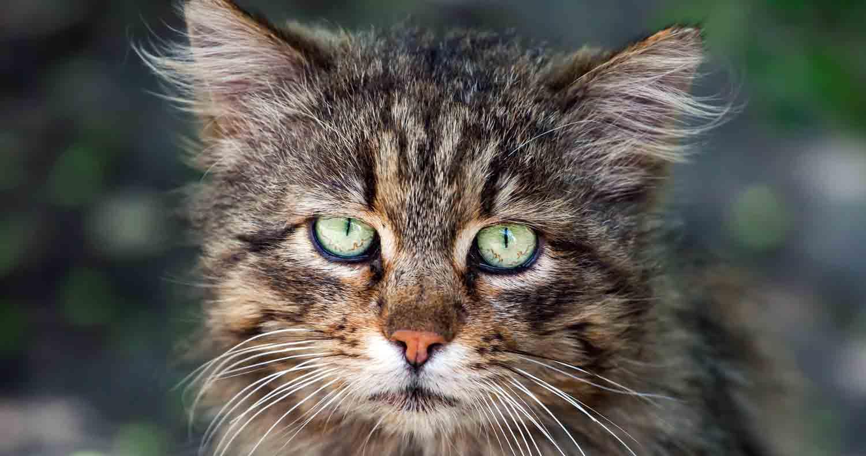 cat-symptoms