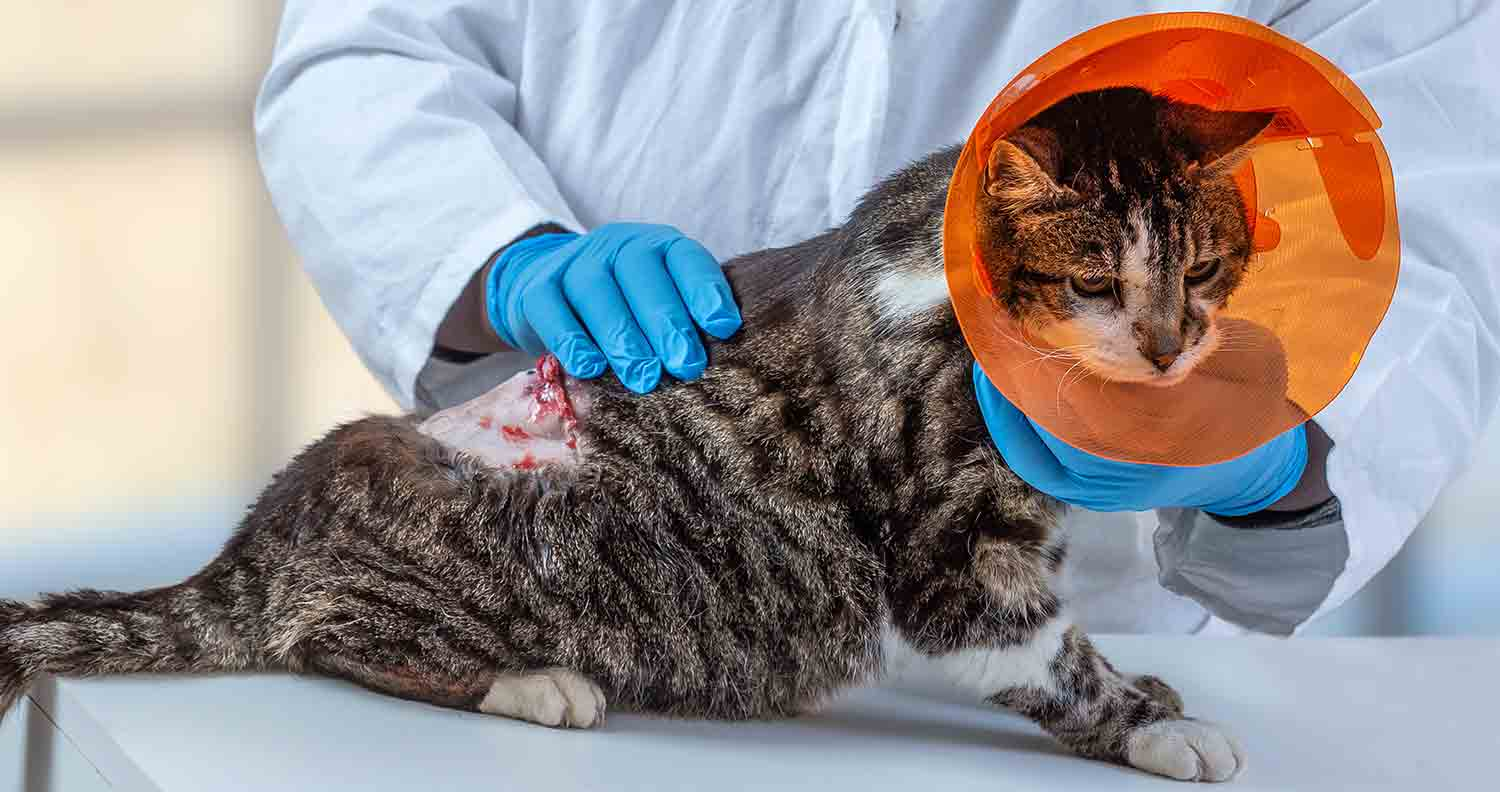 vet-treating-cat-with-cancer