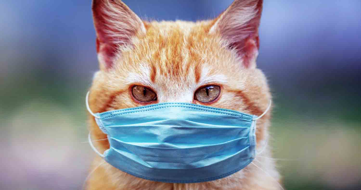 How-to-know-if-your-cat-is-sick